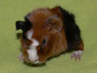 Rosanna (4)