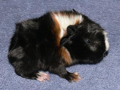 Rufus (1)